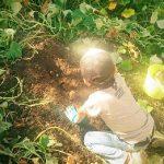 無農薬・低農薬減農薬の危険性〜虫が食べるほど美味しいは間違い!