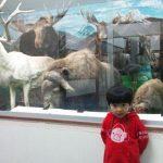 つやま自然のふしぎ館~日本で唯一の博物館 in 津山市
