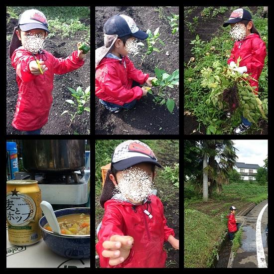 農業体験する幼稚園児