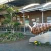 化石掘り体験ができる「なぎビカリアミュージアム」 in 岡山県奈義町