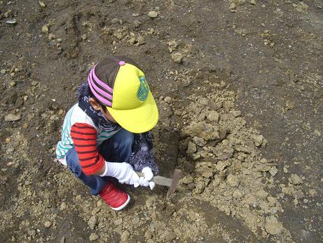 「なぎビカリアミュージアム」 岡山県奈義町で化石掘り体験中