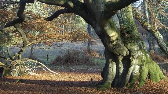 静かな森の風景