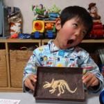 恐竜好きに化石掘り発掘チョコレートとキョウリュウグッズ(大人にも)
