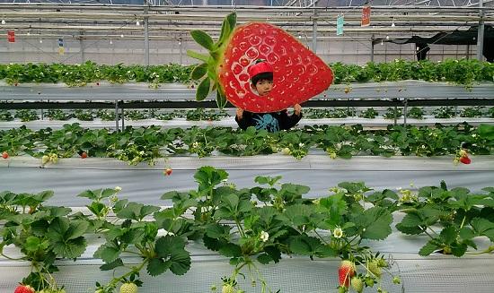 山田養蜂場「みつばち農園」苺ハウス