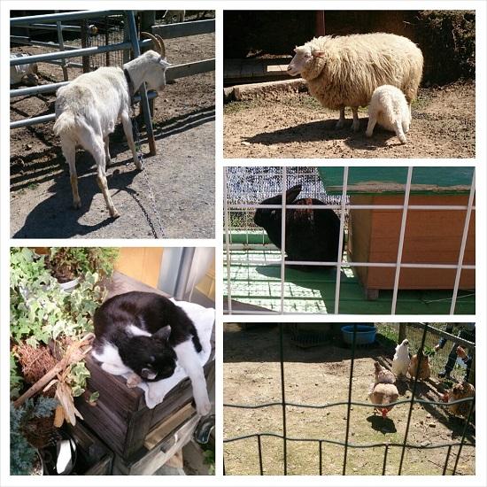 山田養蜂場みつばち農園の動物たち