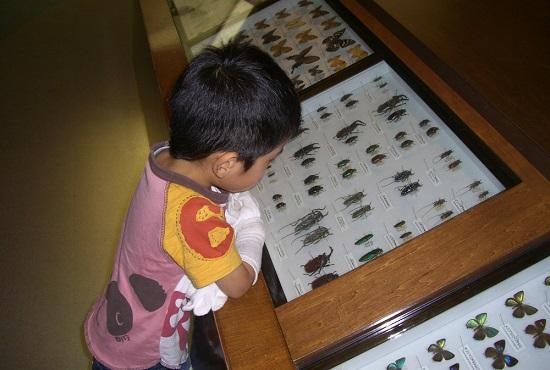 愛媛県総合科学博物館の愛媛のゾーン