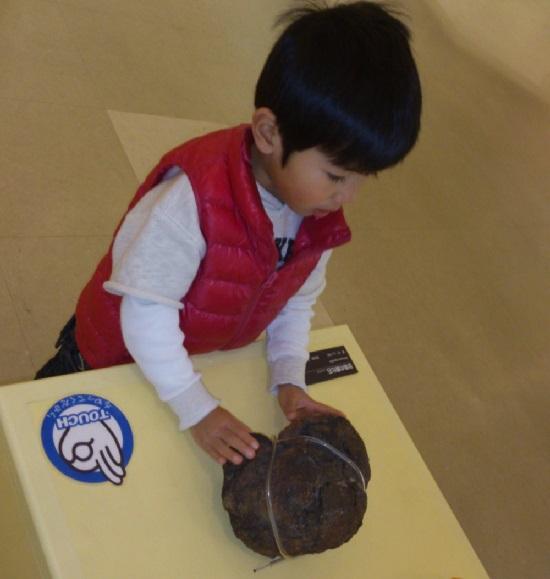 愛媛県総合科学博物館の恐竜のうんち