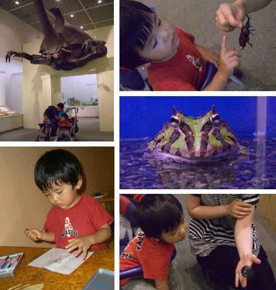 愛媛県総合科学博物館「特別展」昆虫