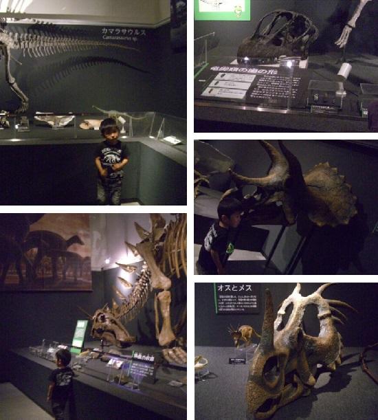愛媛県総合科学博物館「特別展」恐竜博