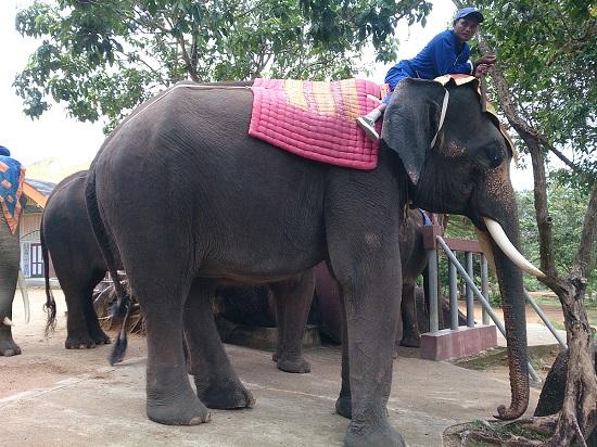 インドネシアの象