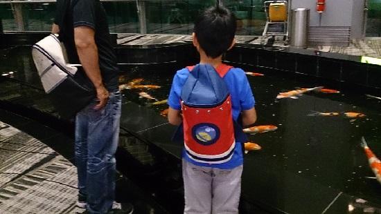 チャンギ空港(シンガポール空港)内の池