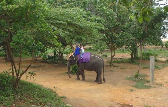 ビンタン島(インドネシア)ニルワナビーチリゾートのエレファントパークの象