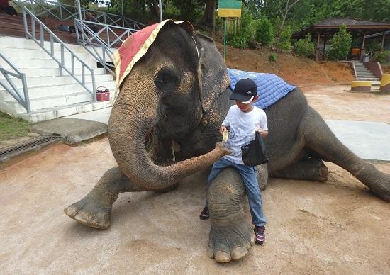 ビンタン島(インドネシア)ニルワナビーチリゾートのエレファントパークで象にエサやり