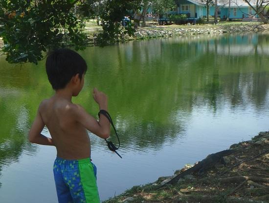 ビンタン島(インドネシア)ニルワナビーチクラブの池とオオトカゲ