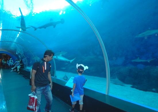 シーアクアリウム(シンガポール)水族館トンネルタイプの水槽