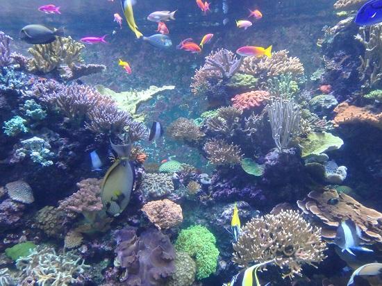 シーアクアリウム(シンガポール)水族館の熱帯魚の水槽