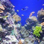 シンガポールセントーサ島の水族館シーアクアリウムでは子供が楽しめるイベントも