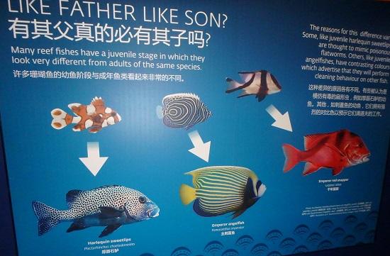 シーアクアリウム(シンガポール)水族館のSPOOKY SEASイベント「魚の成長」