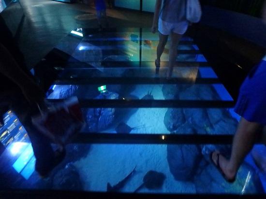シーアクアリウム(シンガポール)水族館の水槽の上を歩く廊下
