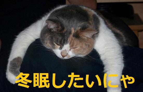 疲れたから冬眠したい