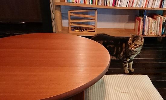 古民家カフェ「歩とり」のネコ