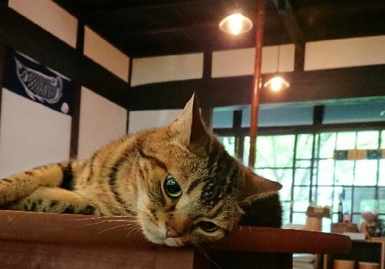 古民家カフェ「歩とり」ネコ