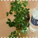 本当の天然水「霧島のむシリカ」を飲んでみた【体験談】