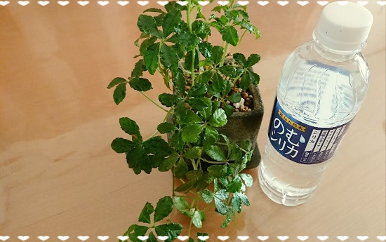 天然水「霧島のむシリカ」のペットボトル