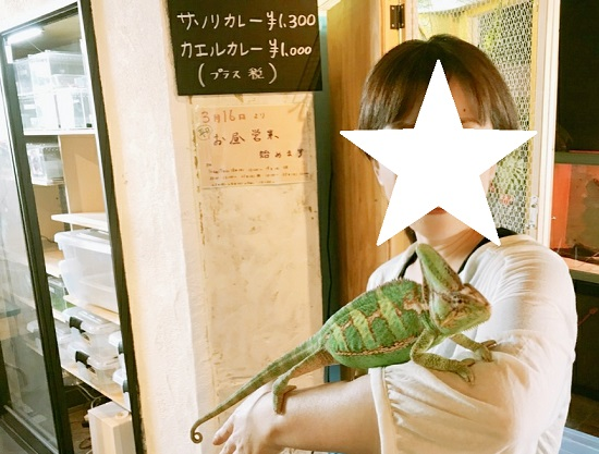 爬虫類カフェ「爬虫れぼ」のカメレオン