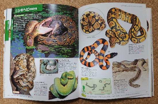 爬虫類・両生類図鑑