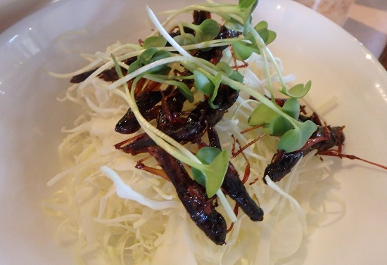 爬虫類カフェ「爬虫れぼ」の昆虫サラダ