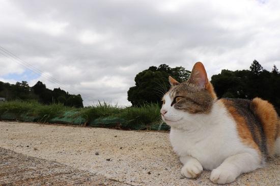 天然酵母のパン屋さんココペリのネコ