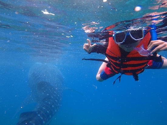 oslobオスロブでジンベイザメと泳ぐ