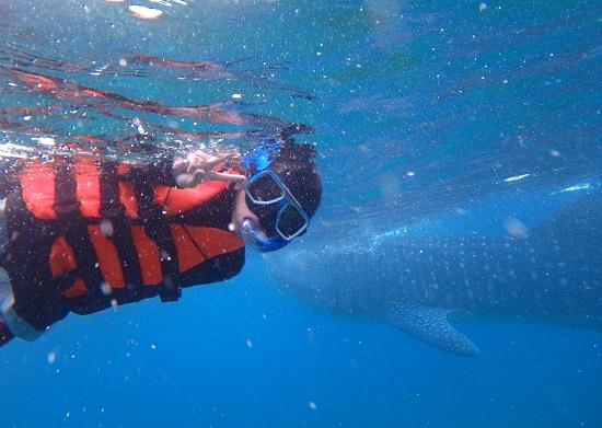 oslobオスロブ(セブ)でジンベイザメとシュノーケリングで泳ぐ