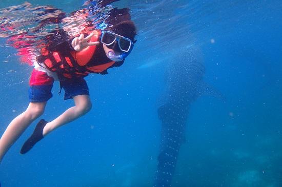 セブ島オスロブの海とジンベイザメ