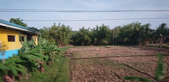 フィリピン(セブ島)の田舎風景