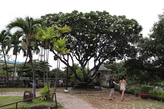 サンペドロ要塞(Fort San Pedro)博物館側の庭