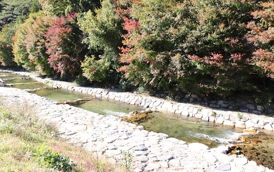 右手養魚センターの渓流(釣り堀)