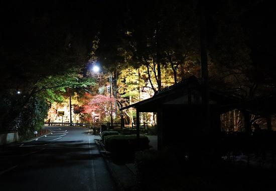 鏡野町「奥津渓」秋のライトアップ