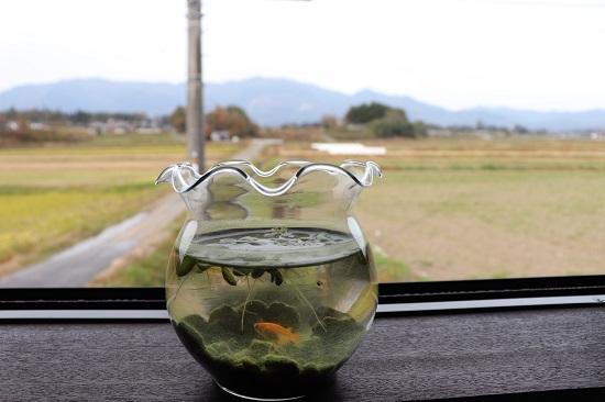 Cafe蔵(奈義町)のカウンター席からの風景