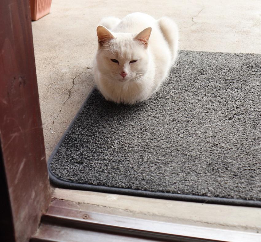 松尾農園ネコ