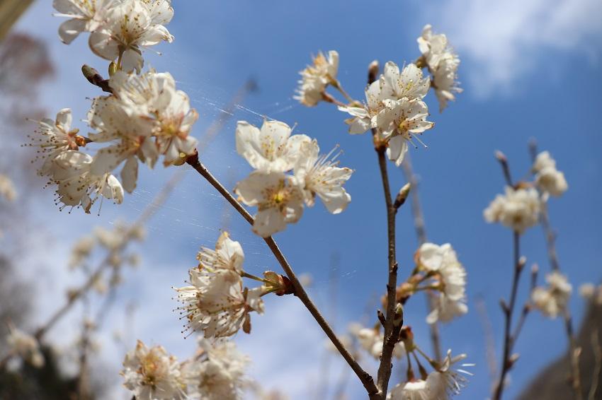 季節の庭(草・木・花)