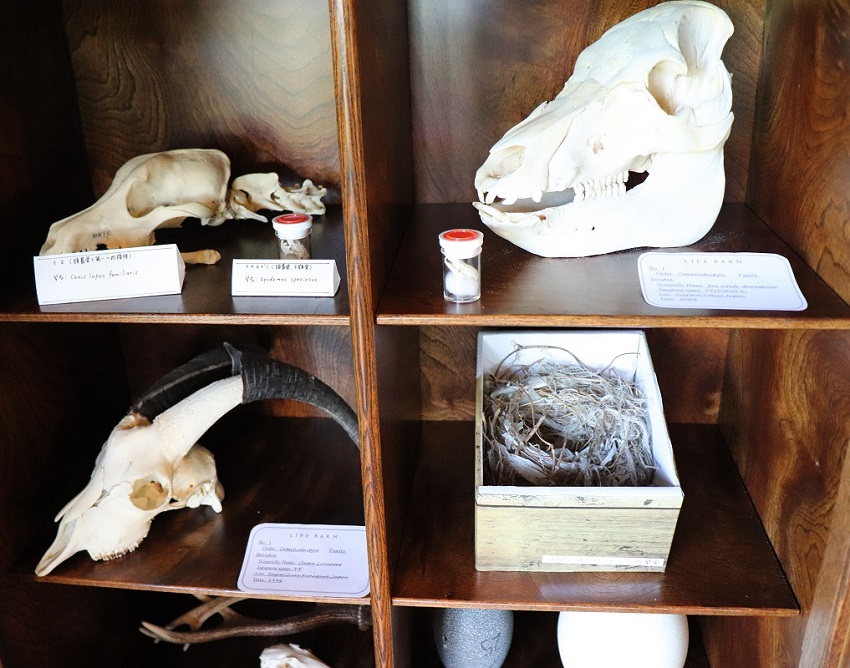 CAFEいきもの舎の動物の骨