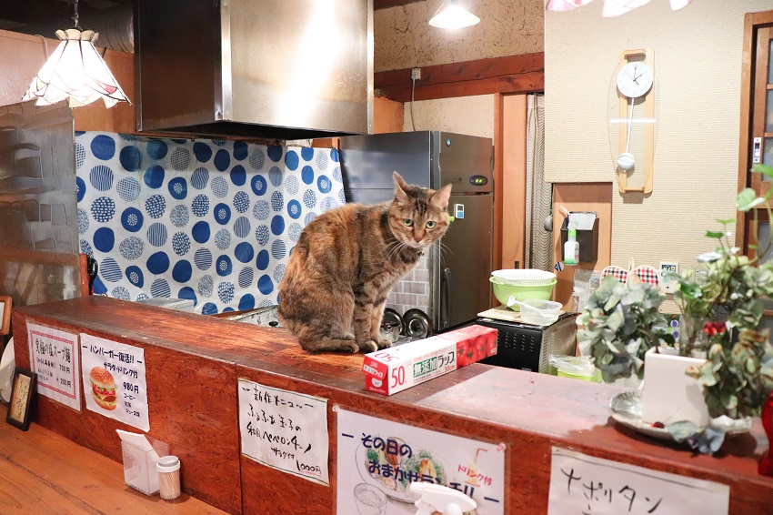 KEN工房のネコ