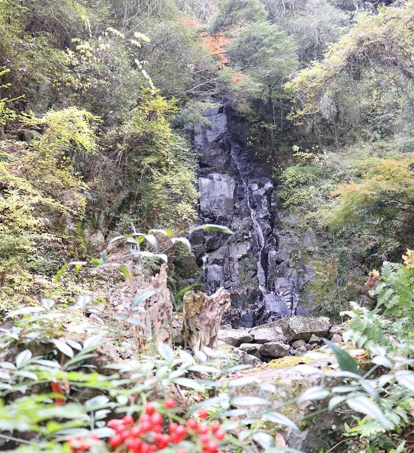 「千早の滝」の紅葉
