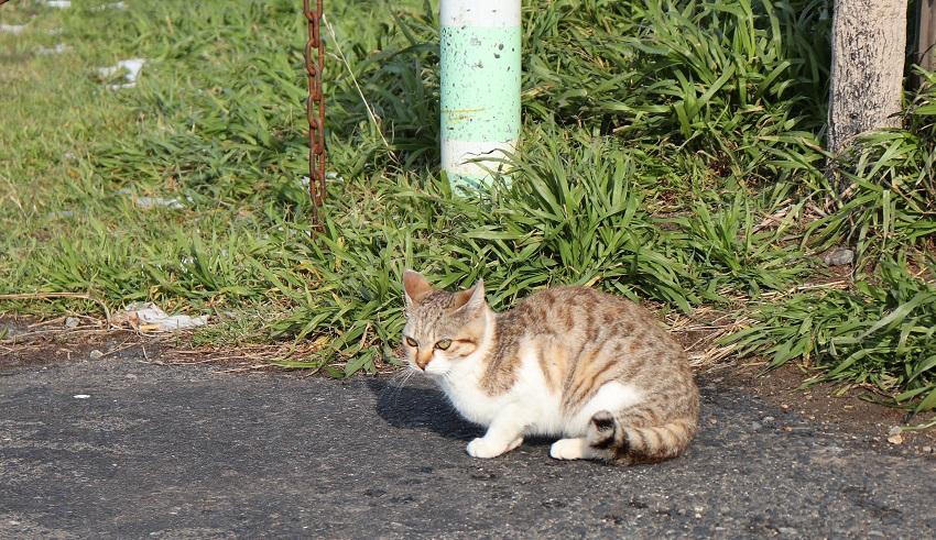 鳥取市(野良猫がたくさんいるところ)