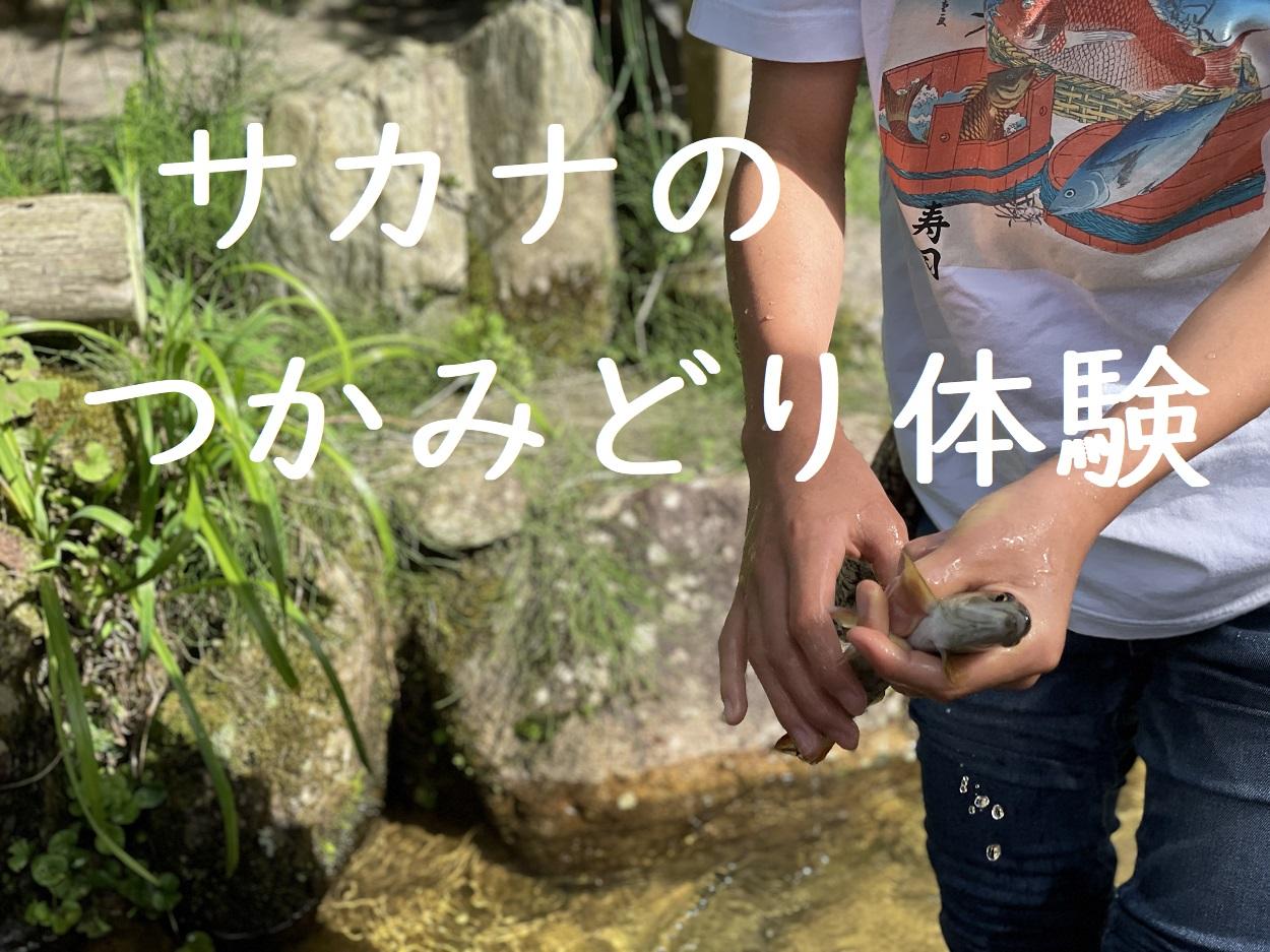 魚のつかみどり体験(岡山県鏡野町)